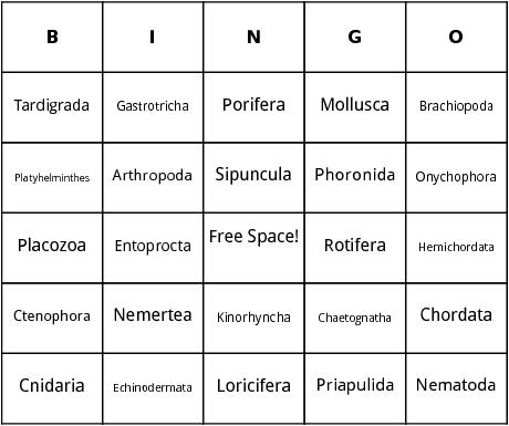 animal phylum bingo