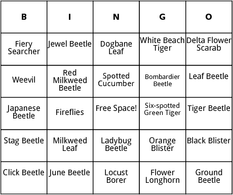 beetles bingo