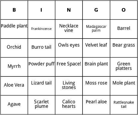 cacti and succulents bingo