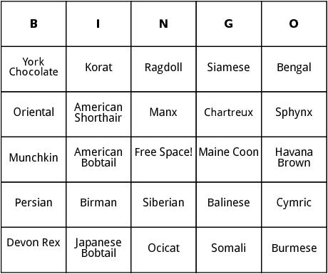 cat breeds bingo