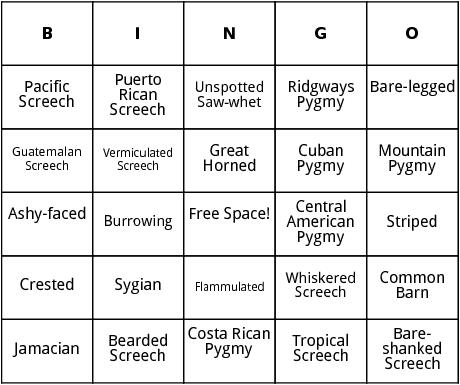 central american owls bingo