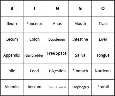 human digestion bingo