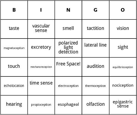 sensory systems bingo