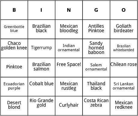 tarantulas bingo
