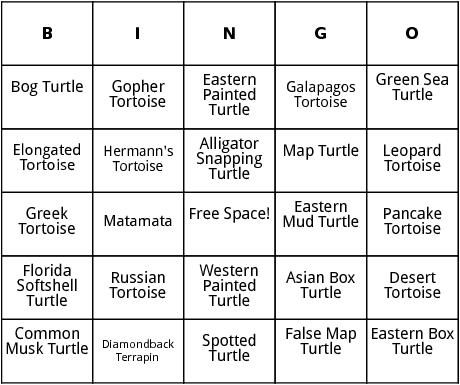 turtle species bingo