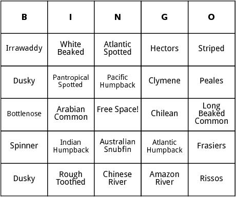 types of dolphins bingo