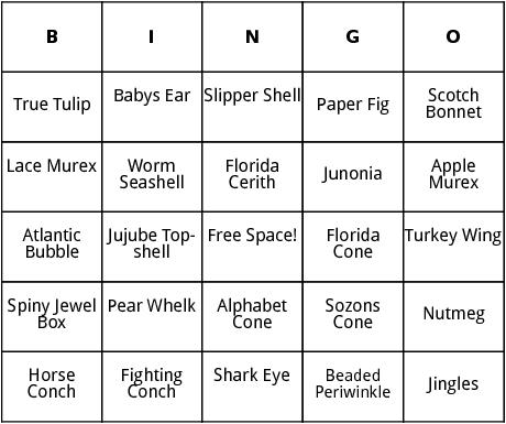 types of seashells bingo